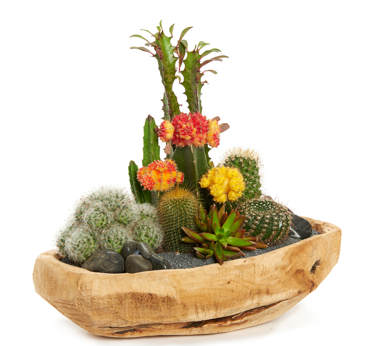 "Natural Wood Low Bowl Small (12"") - Garden"