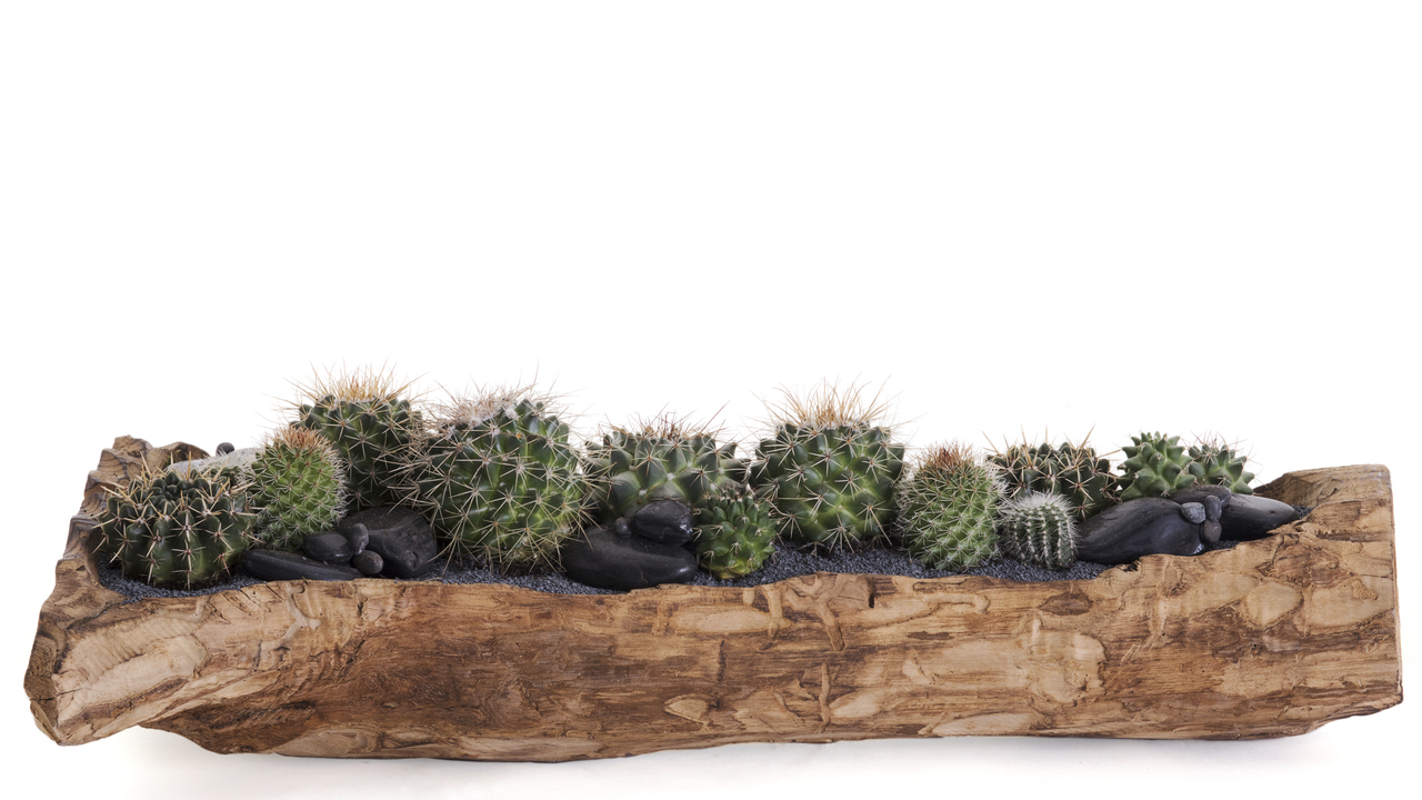 "Natural Wood Trough Long - Green Garden (12"" H x 24"" W)"