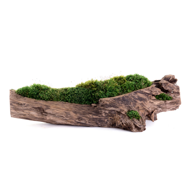 "Natural Wood Trough Long - Moss (6"" H x 24"" W)"