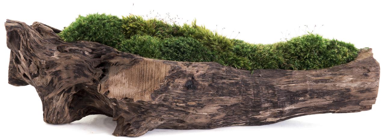 "Natural Wood Trough Long - Moss (6"" H x 24"" W)"