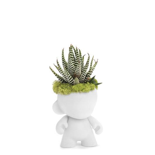 "Munny Mini Garden - Succulent (4"" H x 3"" H)"