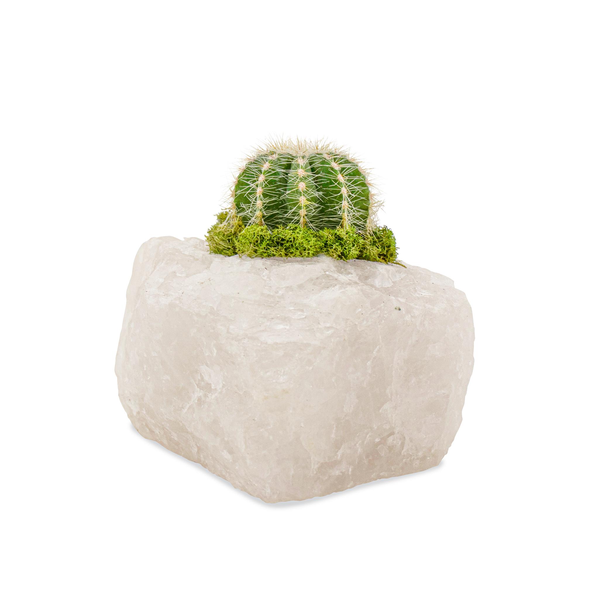 Snow Quartz - Cactus