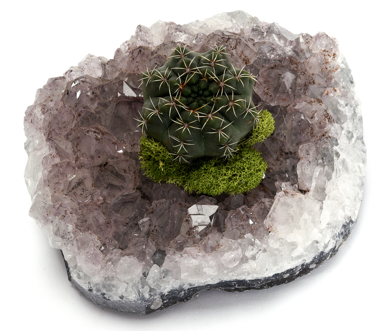 Amethyst Crystal with Cactus