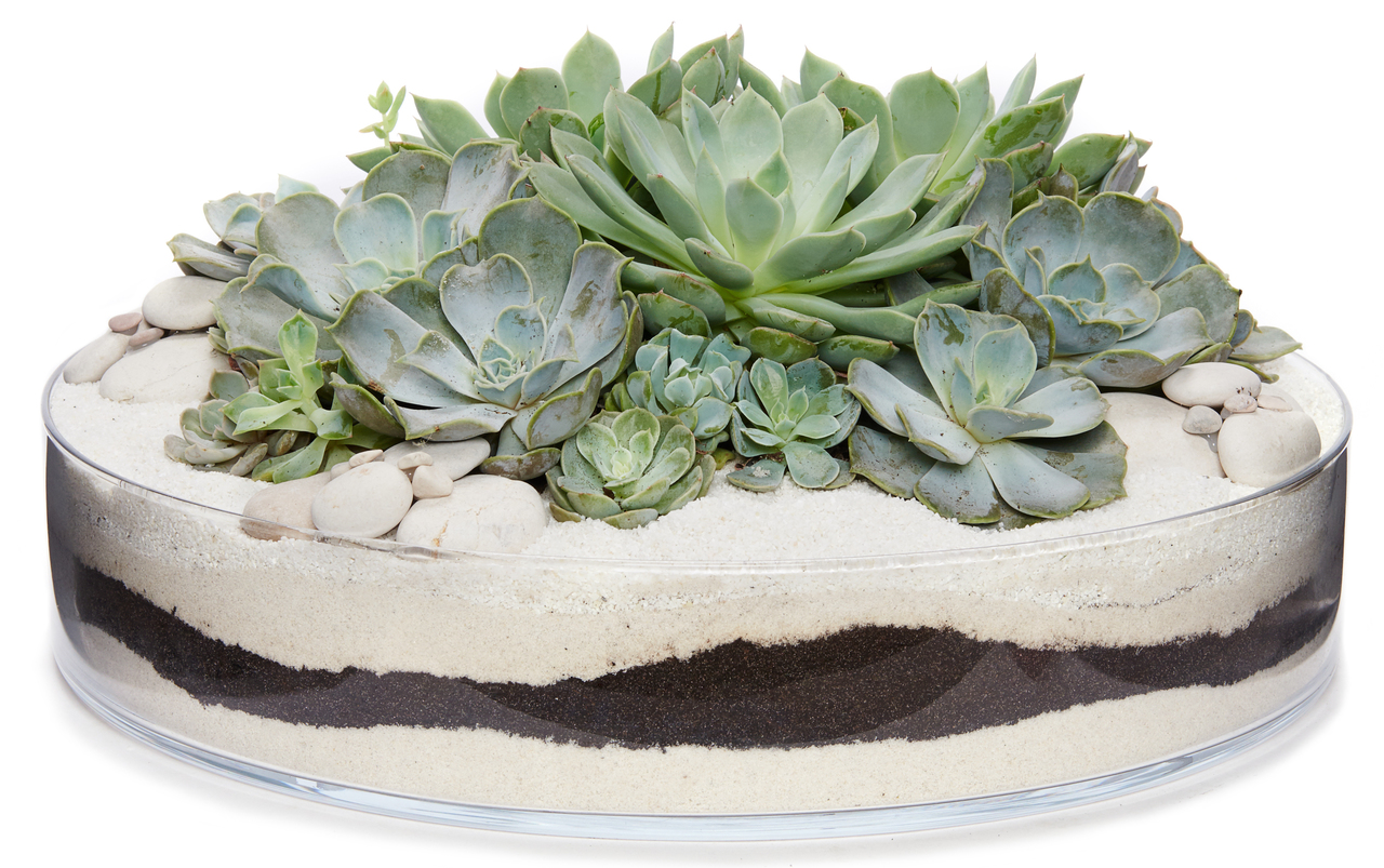 Succulent arrangement in a clear dish
