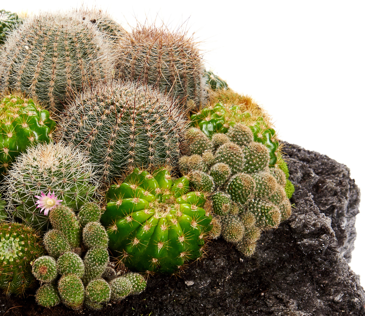 "Feather Rock - Green Garden (15"")"