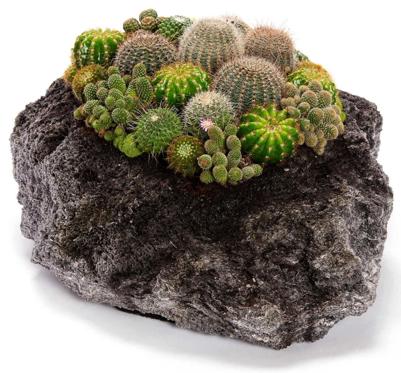 The Symbolic Meaning Behind Succulent Arrangements - Plant The Future