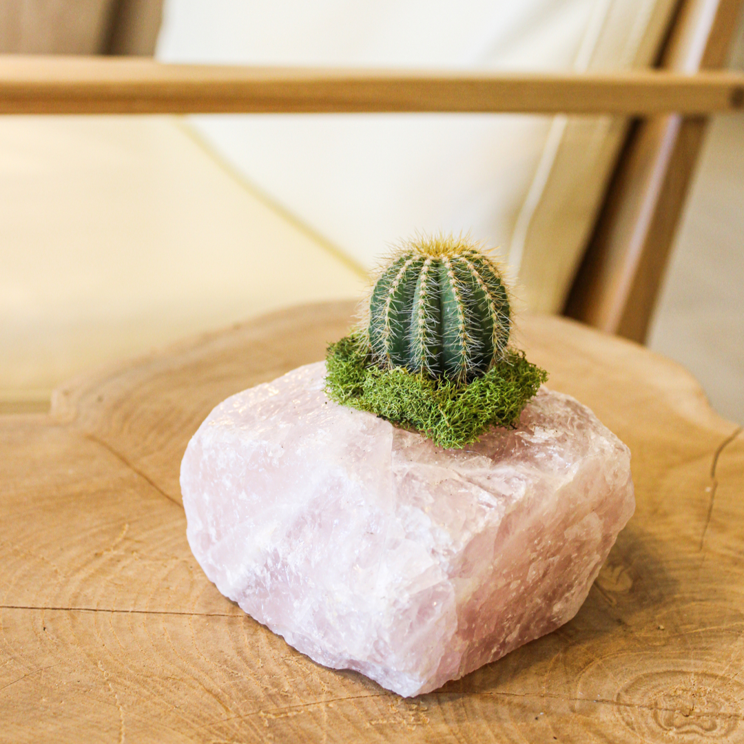 Rose Quartz with Cactus