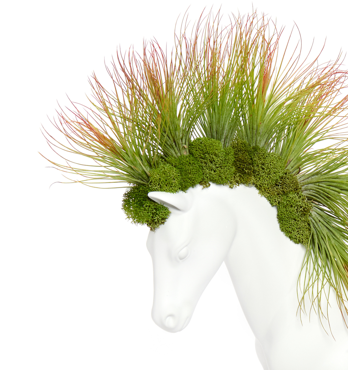 Horse Small Walking - Andreana Airplants (Made to Order)