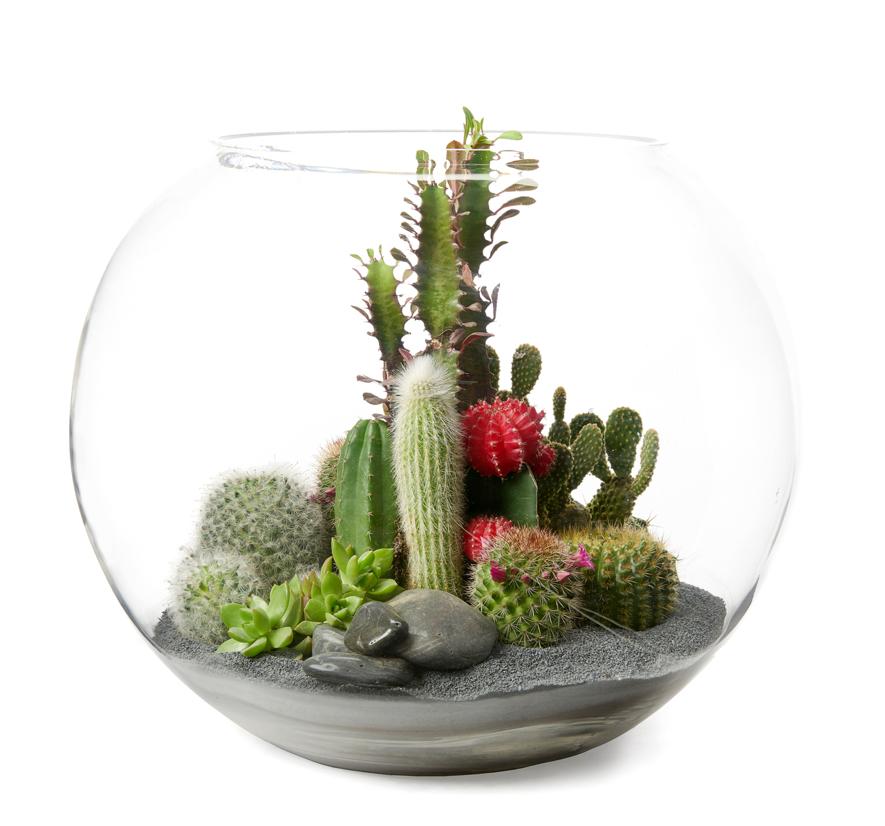 "Fishbowl Terrarium Large - Black (12.5"" H x 15"" D)"