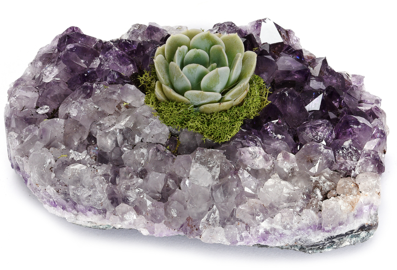 "Amethyst Crystal with Succulent (5"" W x 5"" H)"