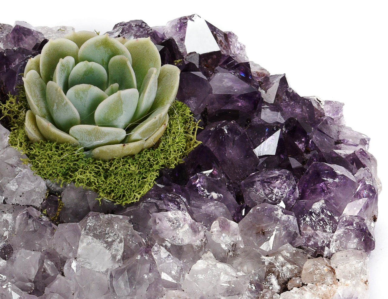 "Amethyst Crystal with Succulent - Large (4.5"" - 5.5"")"