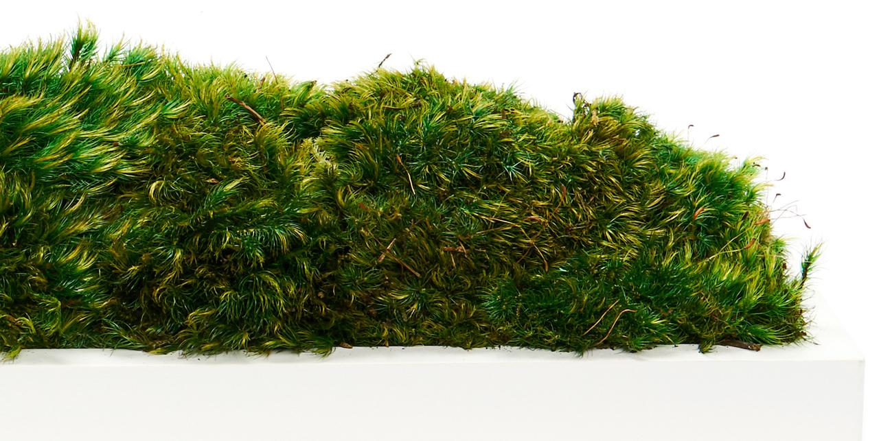 """White Wood Trough  - Moss (36"""" W x 6"""" H)"""
