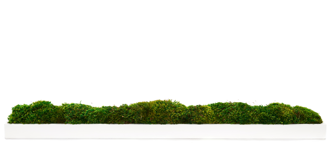 "White Wood Trough - Moss (48"" W x 6"" H)"