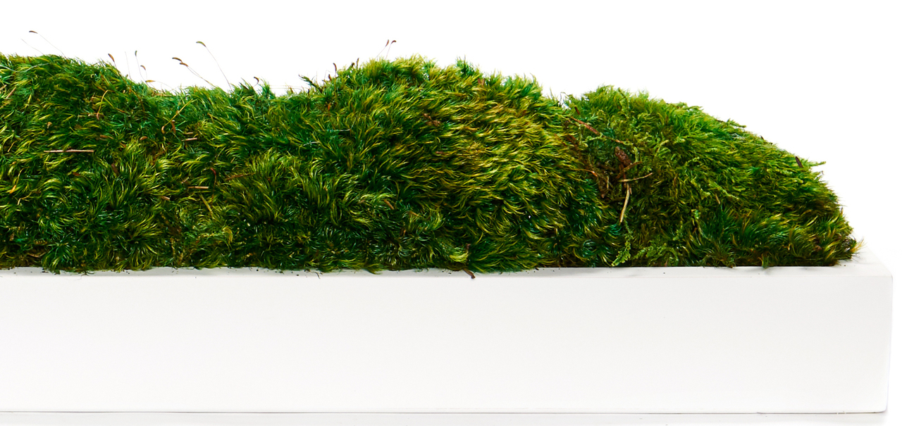 "White Wood Trough 48"" - Moss"