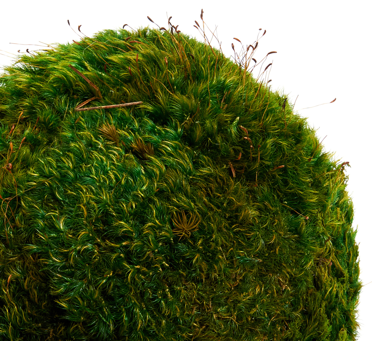 Moss Sphere Large (8'')