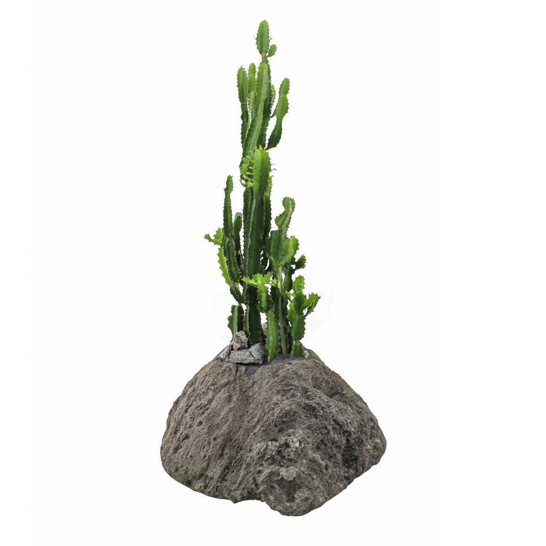 Feather Rock Planter - Desert Candle Cactus (Euphorbia Acrusensis)