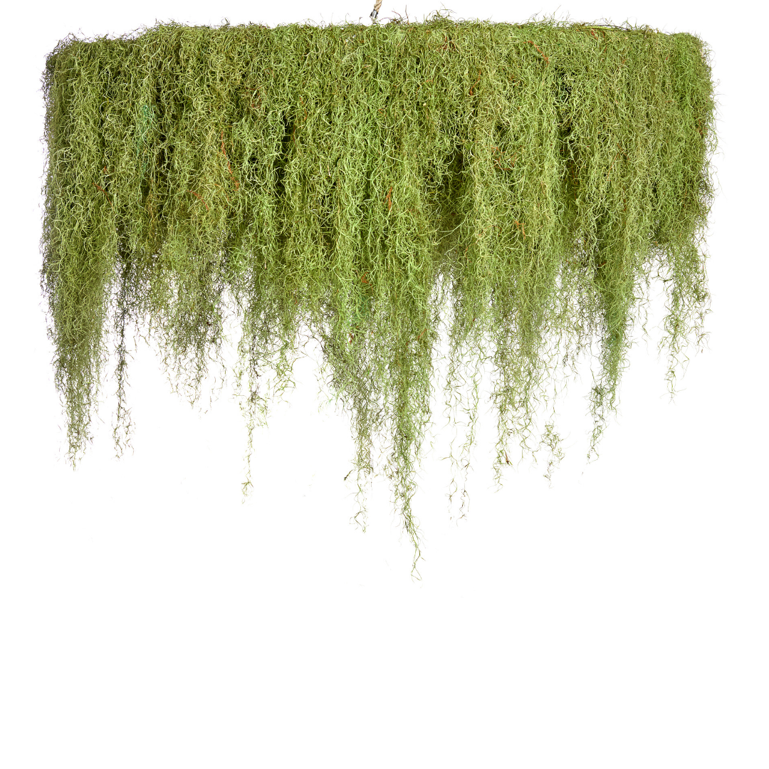 "Moss Chandelier - 1 Tier (Large - 64"")"