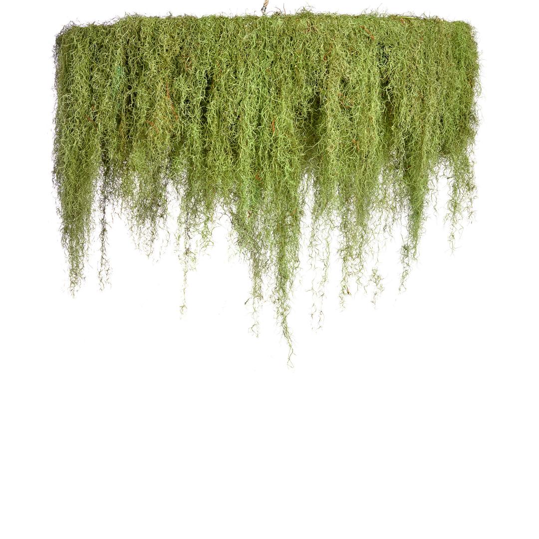 """Moss Chandelier - 1 Tier (Medium - 54"""")"""