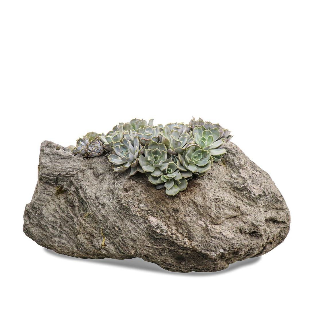 "Feather Rock Planter with Succulents (12""H)"
