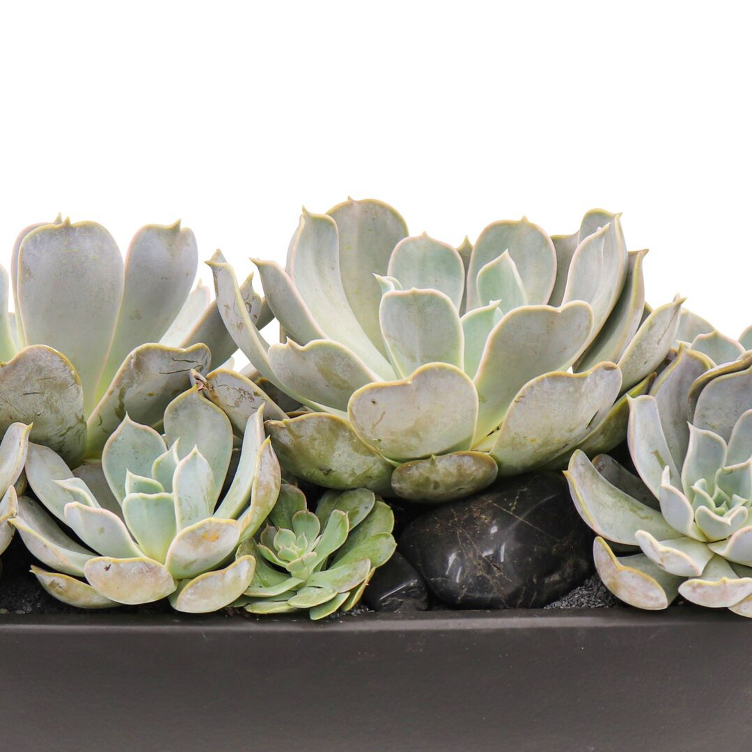 "Germany Boat Black with Succulents (Large - 8.5""H)"
