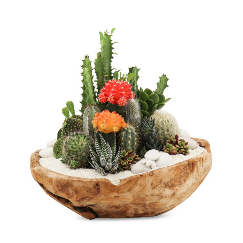 "Natural Wood Bowl Small (14""H) - Garden (White Top)"