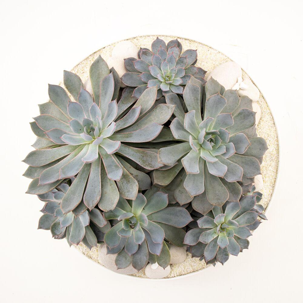 """Tokyo Bowl - Succulents (Large - 11"""")"""