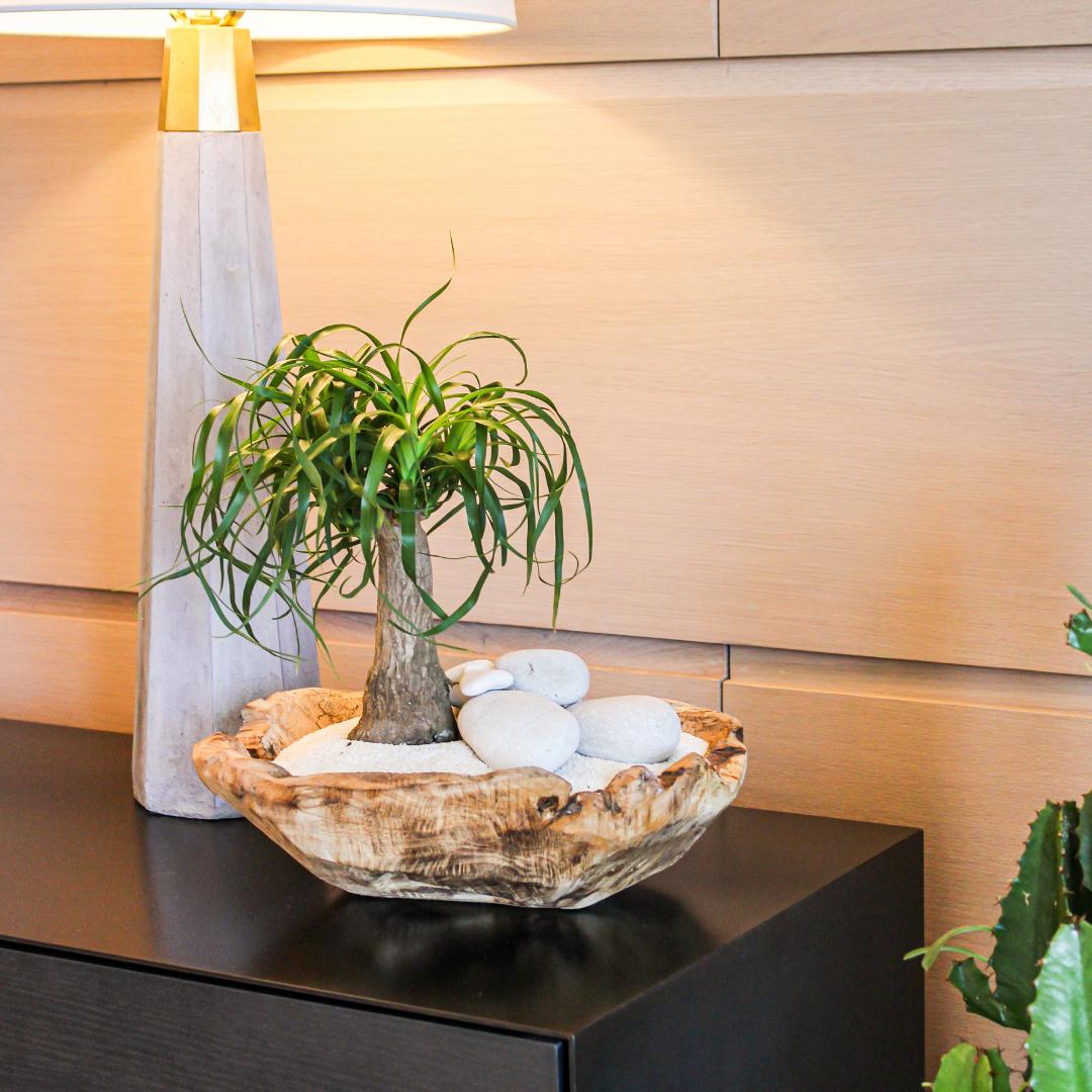 """Natural Wood Bowl - Ponytail Palms (Small - 12"""")"""