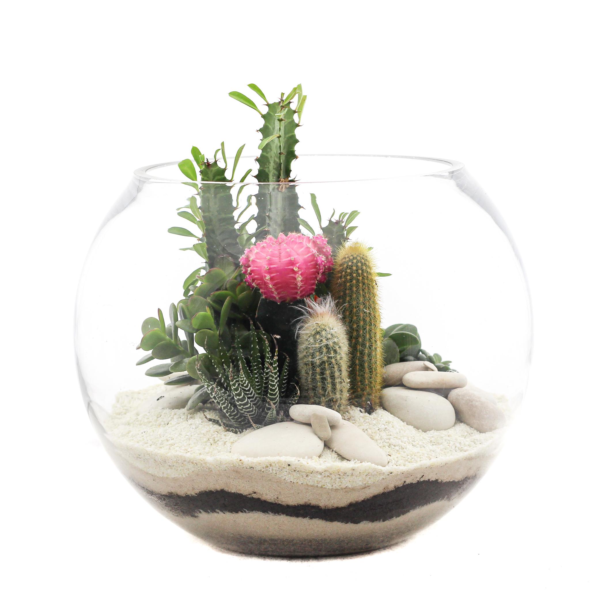 """Fishbowl Terrarium Medium - White (10"""" H x 12"""" D)"""