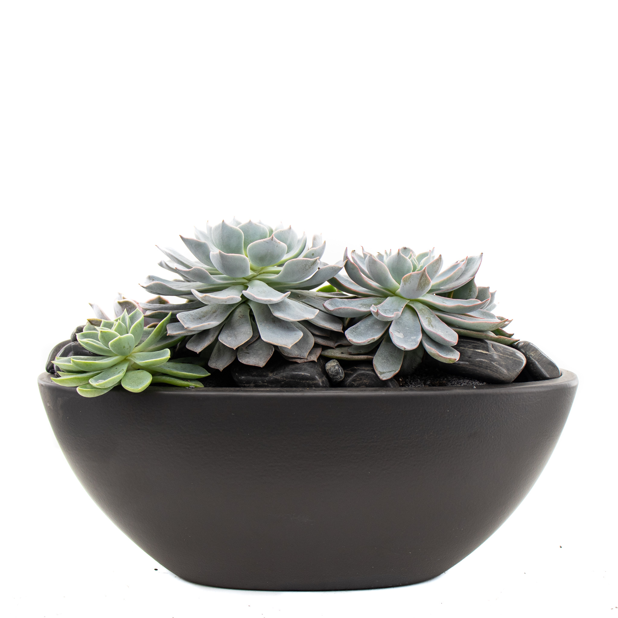 "Germany Boat Black Small - Succulents (7"" H x 11"" W)"