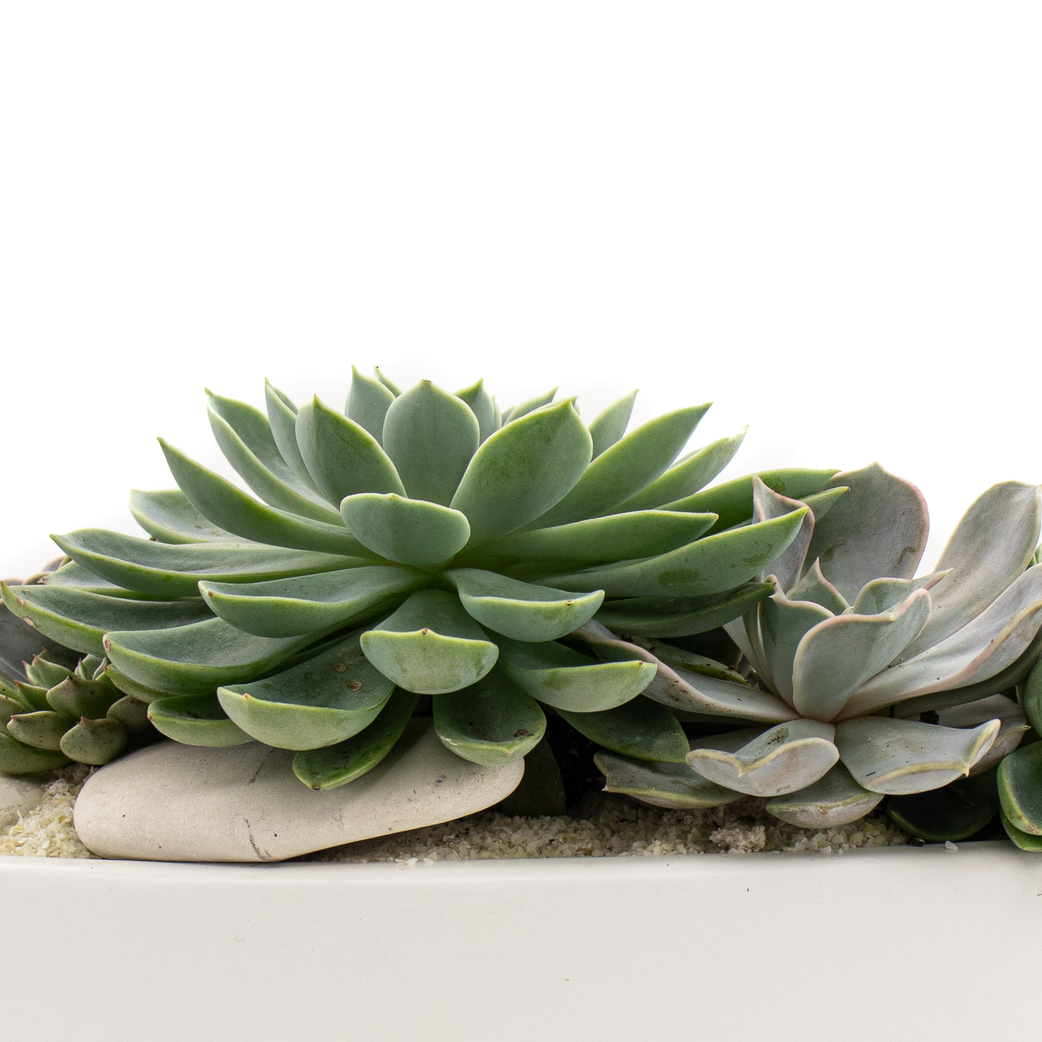 """Germany Boat White Small - Succulents (7"""" H x 11"""" W)"""