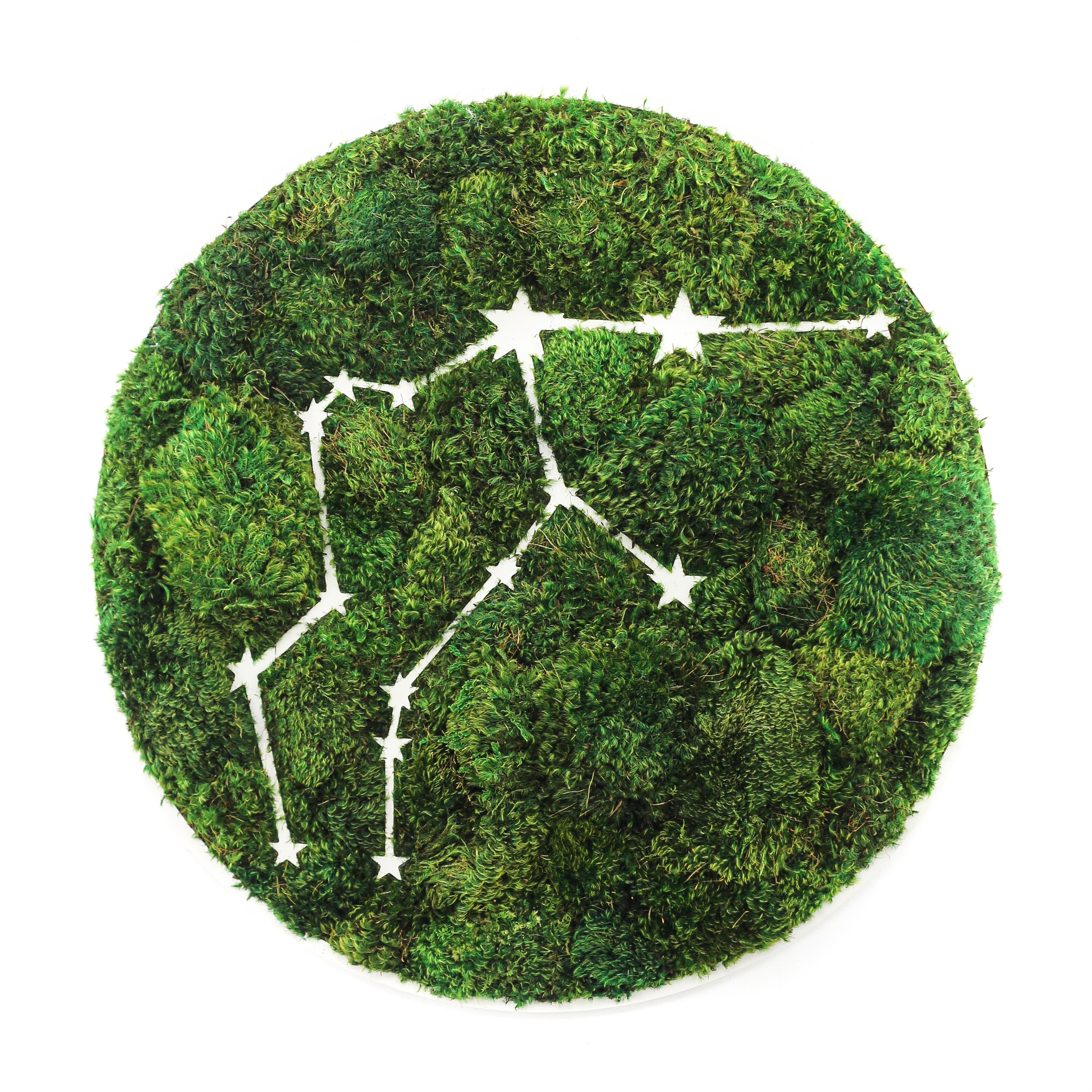 "Aquarius Constellation - Moss Wall Art (30"" Diameter)"