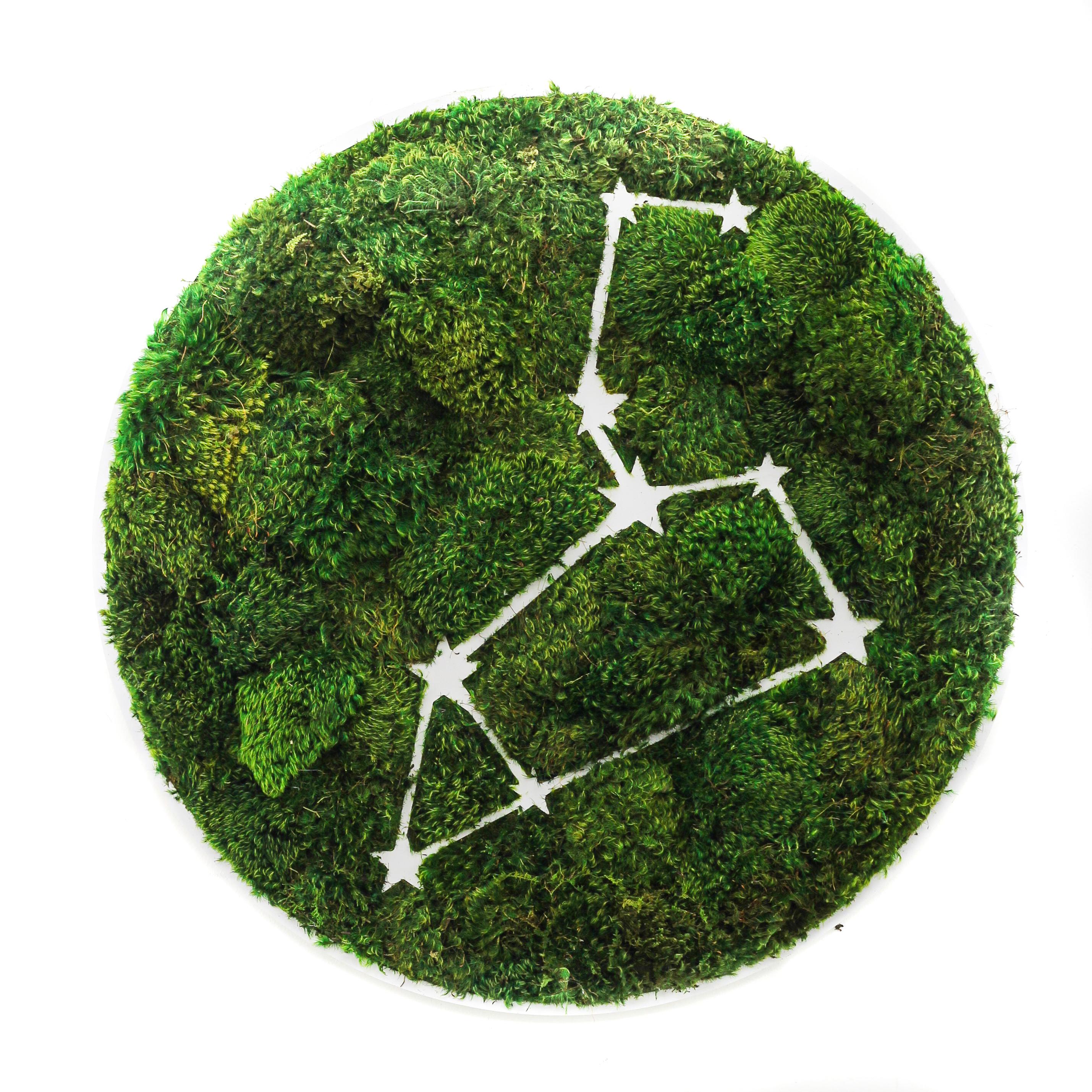 """Leo Constellation - Moss Wall Art (30"""" Diameter)"""
