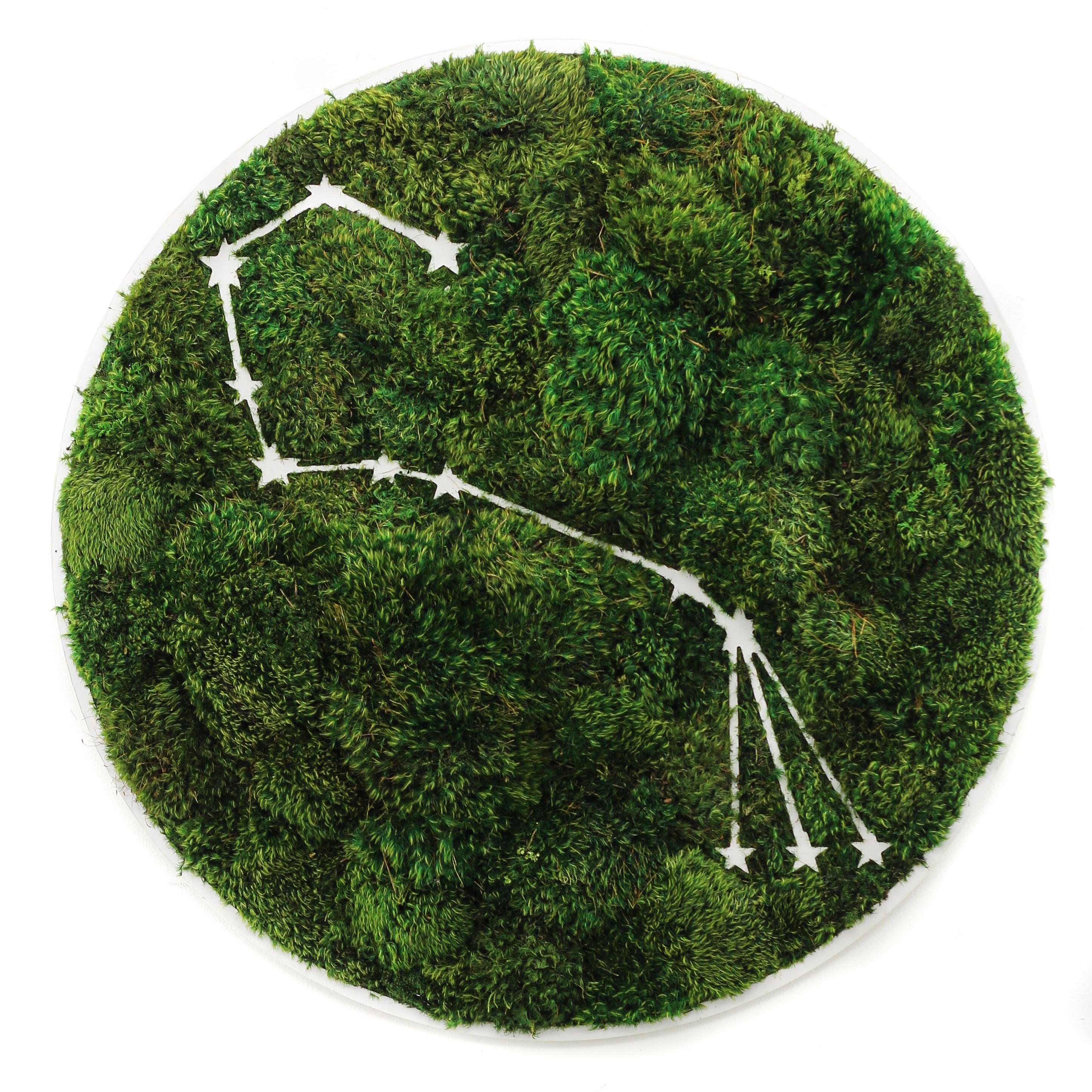 "Scorpio Constellation - Moss Wall Art (30"" Diameter)"