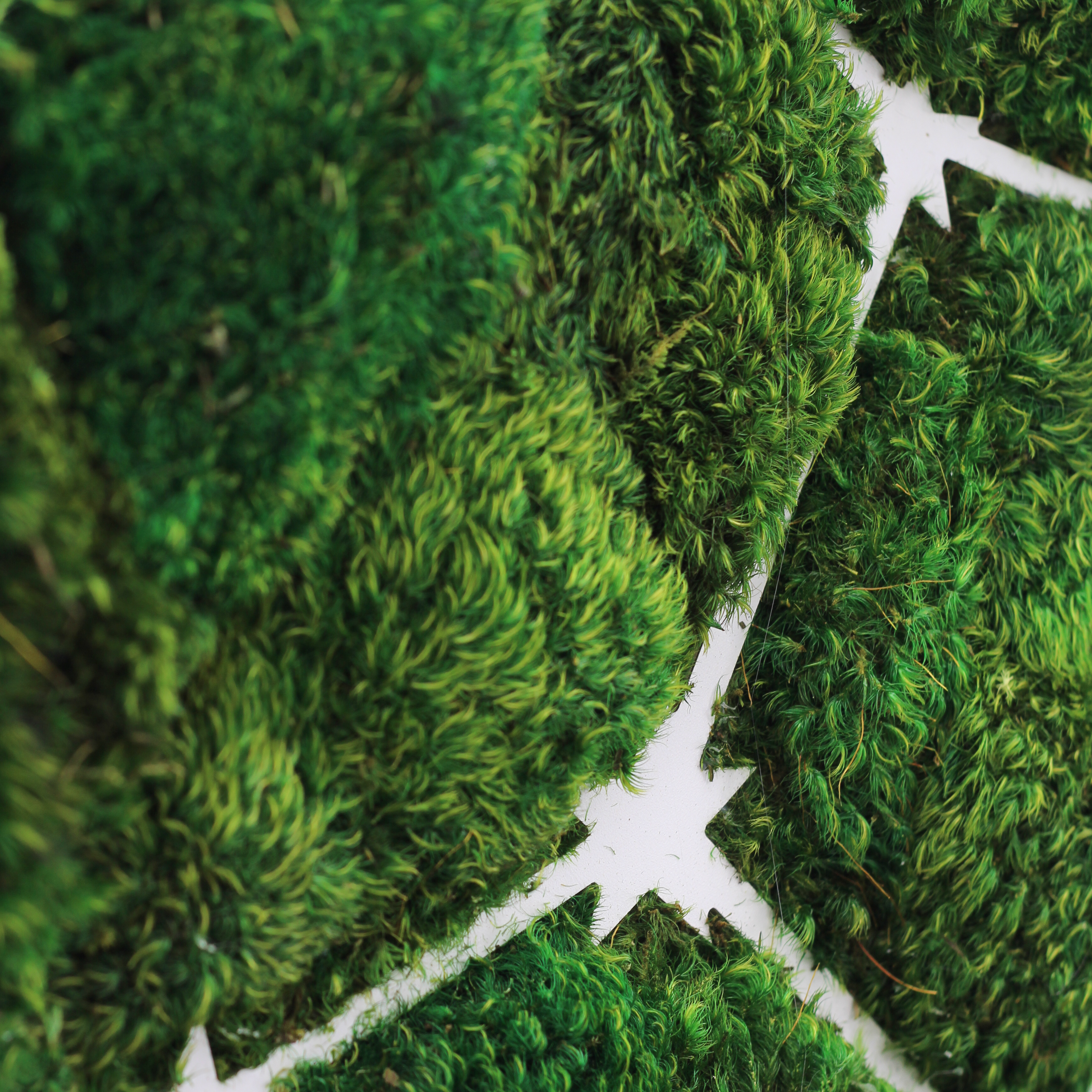 "Virgo Constellation - Moss Wall Art (30"" Diameter)"