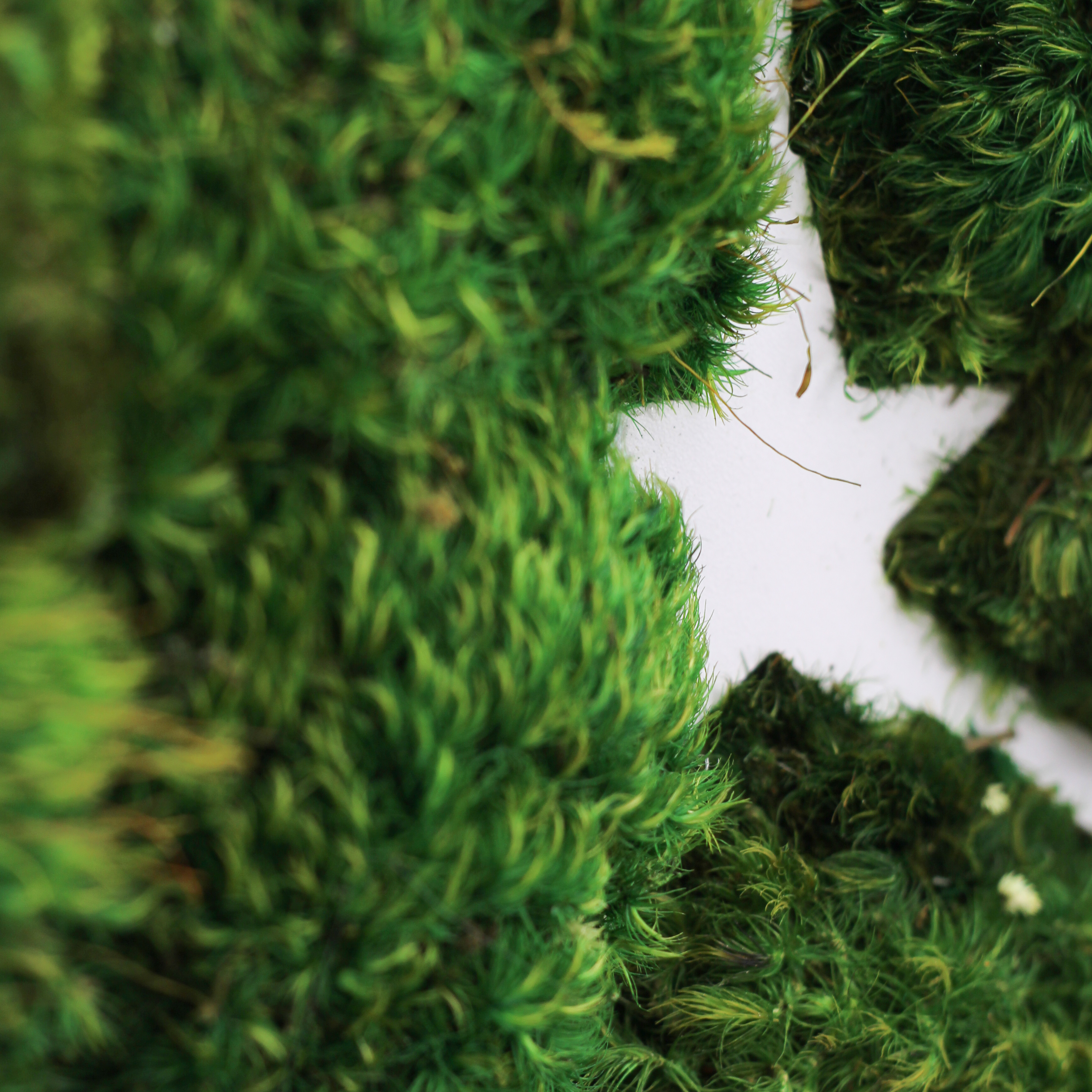 """Cancer Constellation - Moss Wall Art (30"""" Diameter)"""