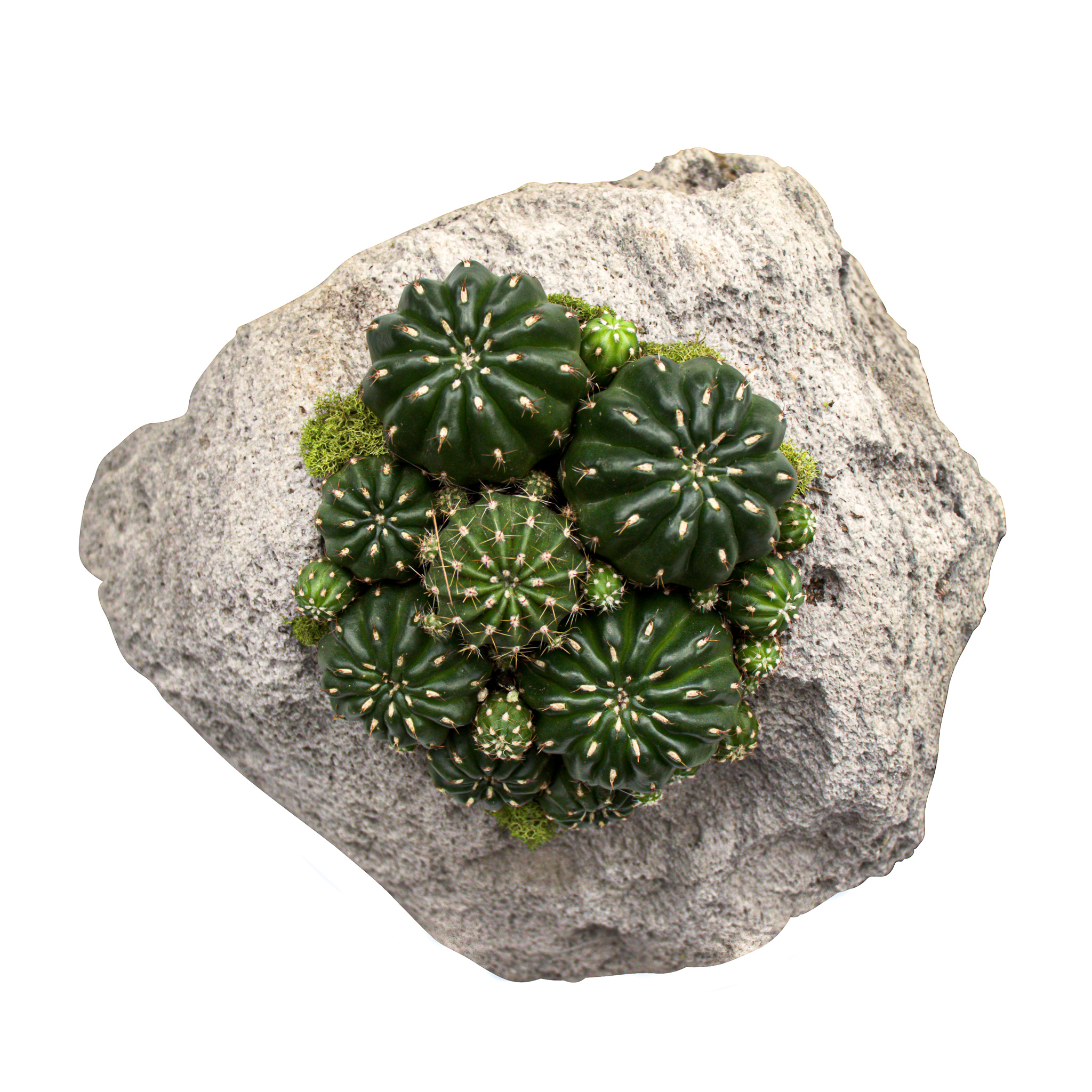 "Feather Rock Small - Cacti (8"" H x 9"" D)"