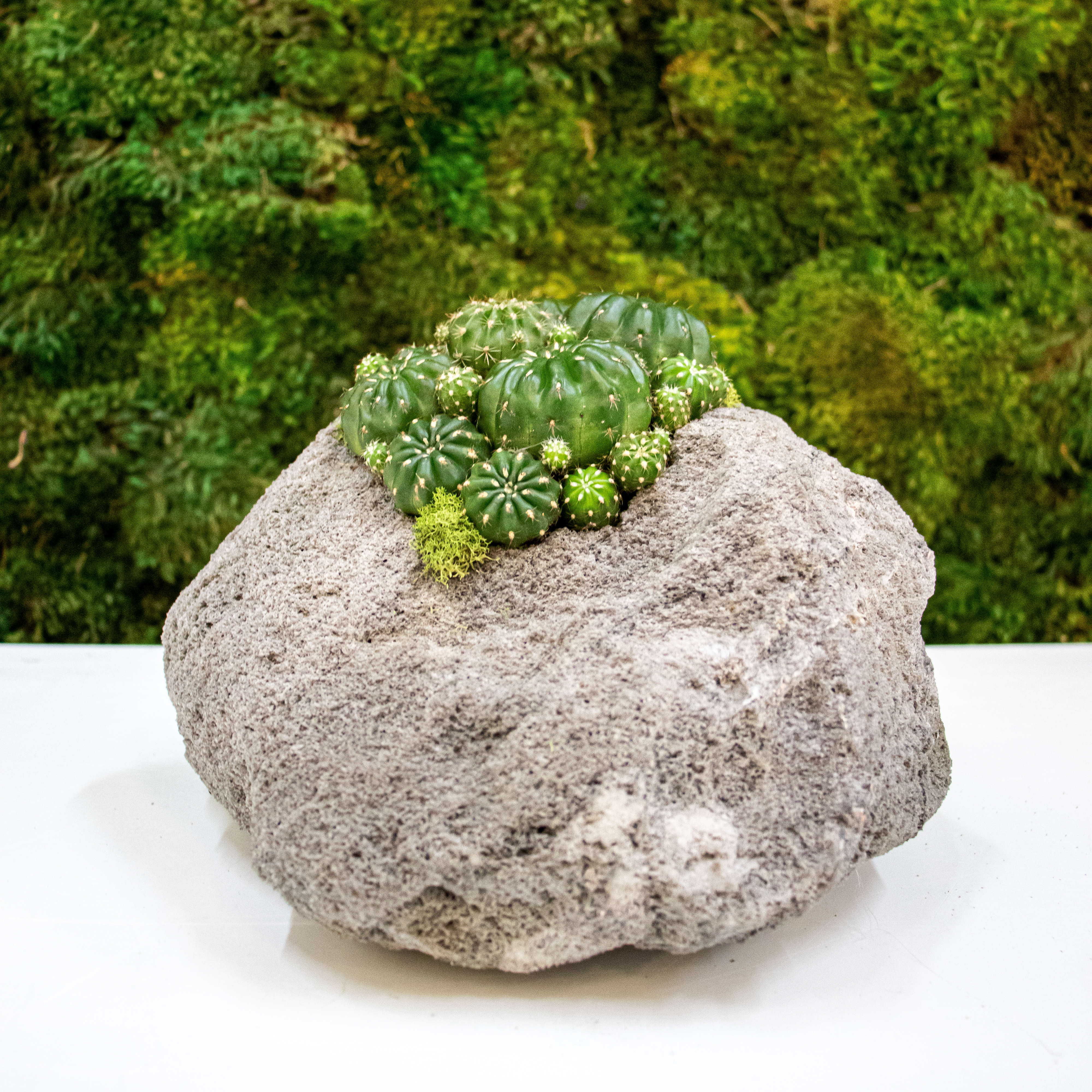 """Feather Rock Small - Cacti (8"""" H x 9"""" D)"""