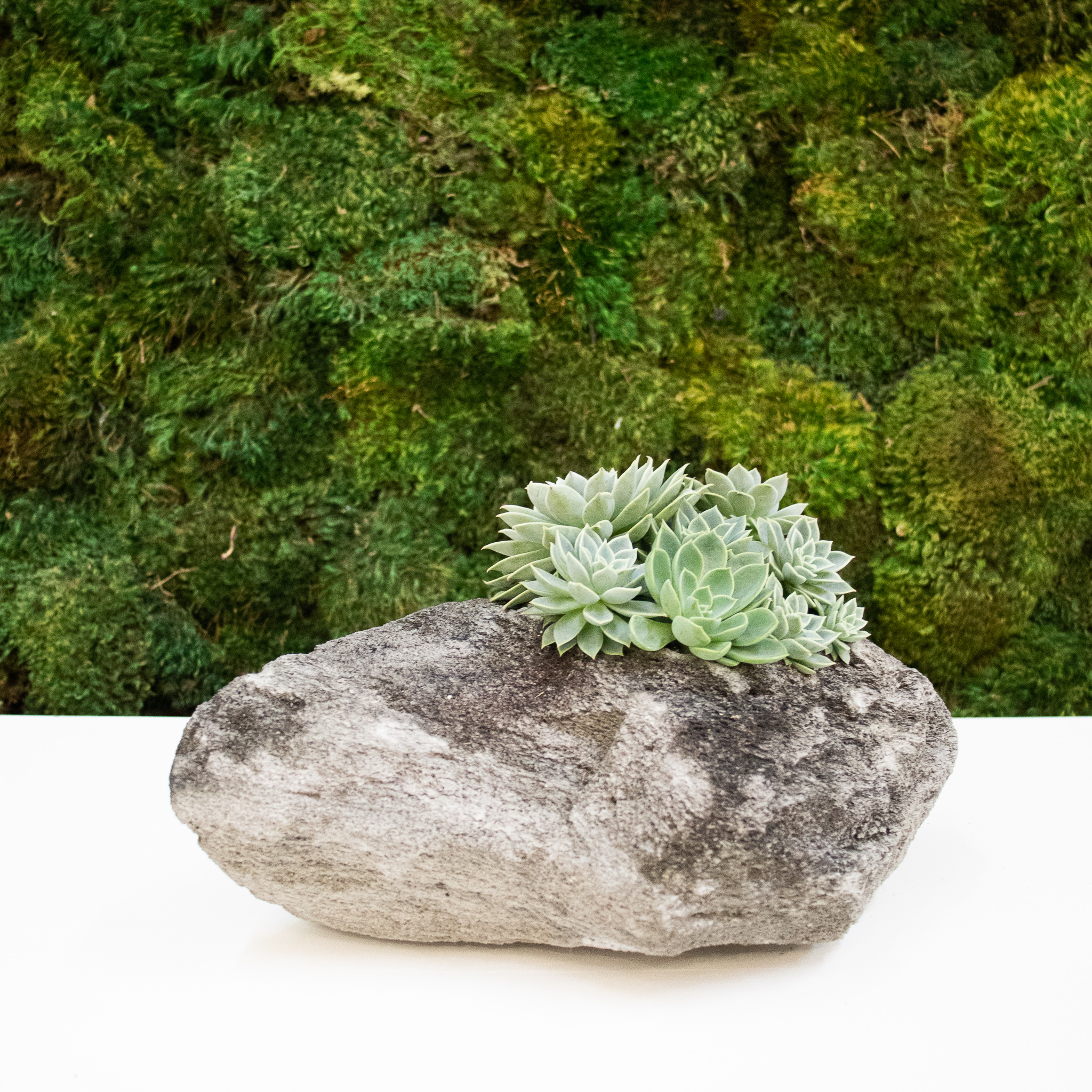 "Feather Rock Small - Succulents (9"" H x 9"" D)"