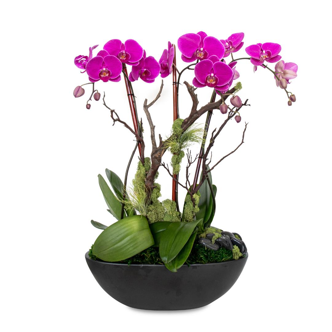 Germany Boat Large Black - Triple Phalaenopsis Orchid