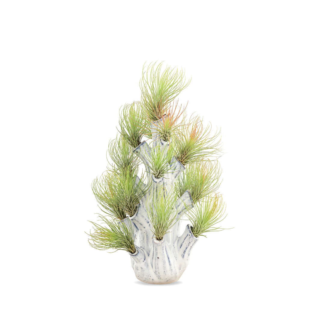 "Airplant Tree Trunk - Small (11"" H x 5.5"" D)"