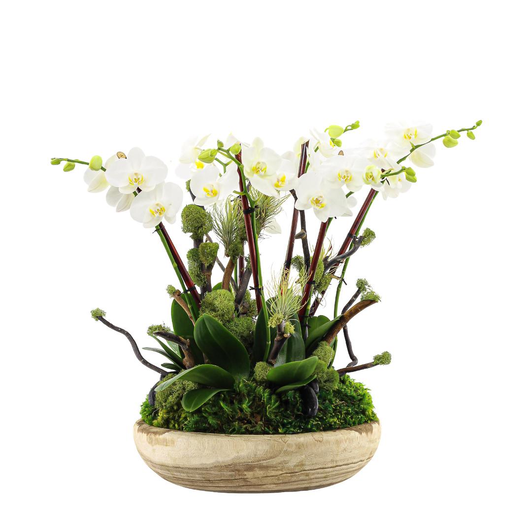 "Tulum Small -  Five Mini Phalaenopsis Orchids (24"" H x 8.5"" D)"
