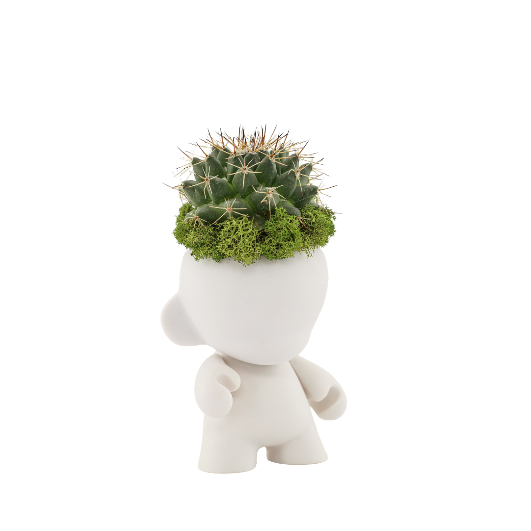 "Munny Mini Garden - Cactus (4"" H x 3"" W)"