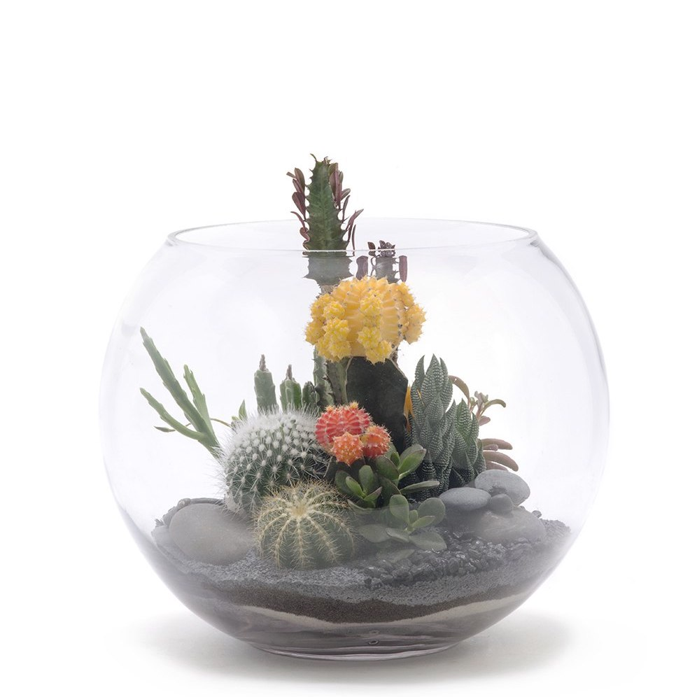 "Fishbowl Terrarium Medium - Black (10"" H x 12"" D)"