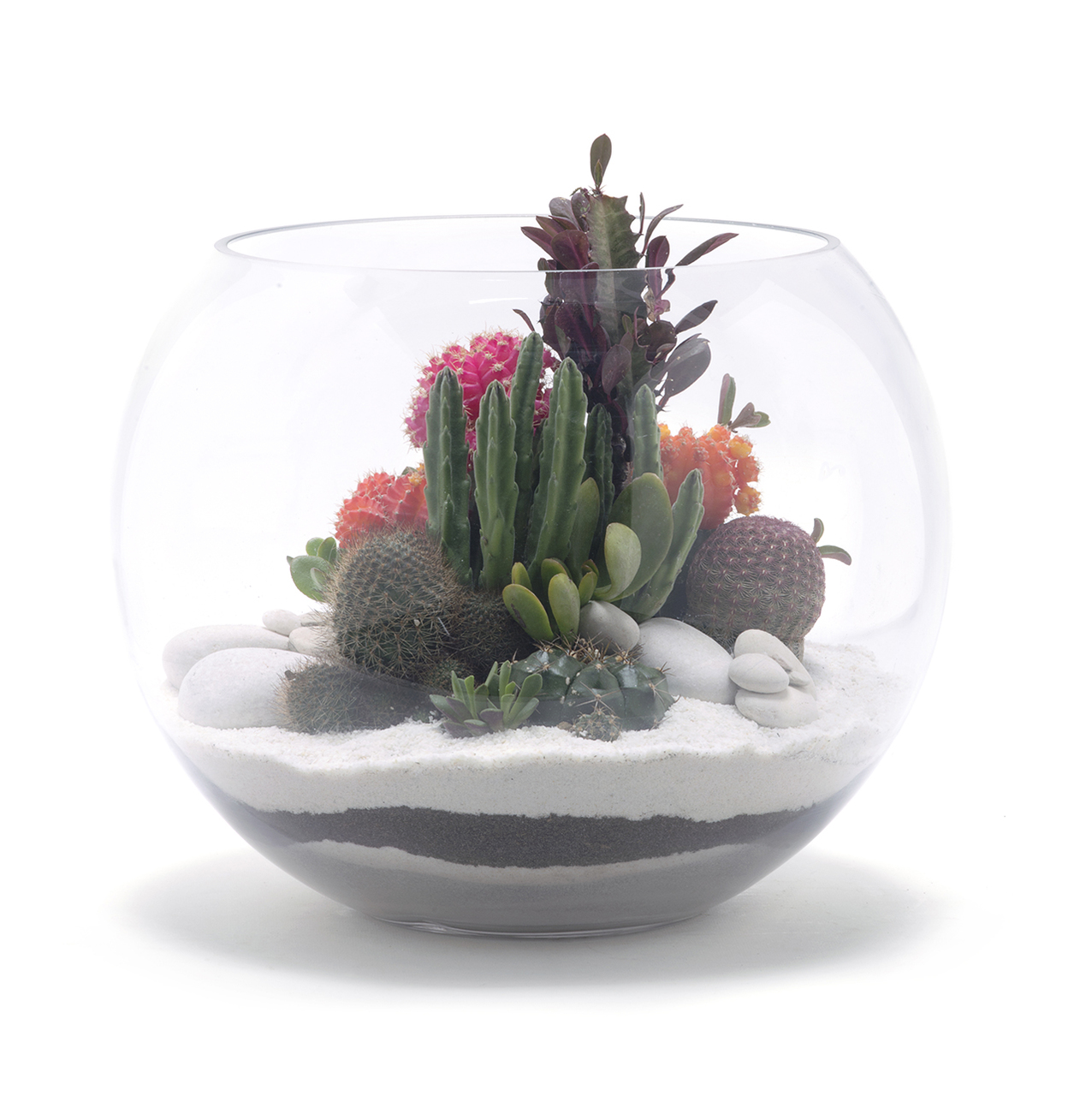 Fishbowl Terrarium Large White 12 5 H X 15 D Plant The Future