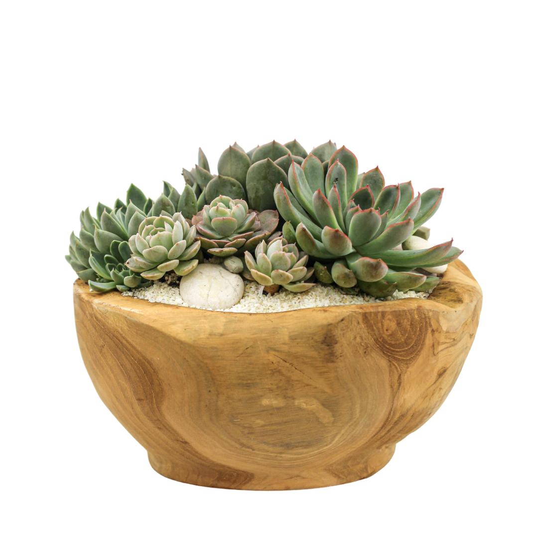 Natural Wood Bowl Mini -  Succulents