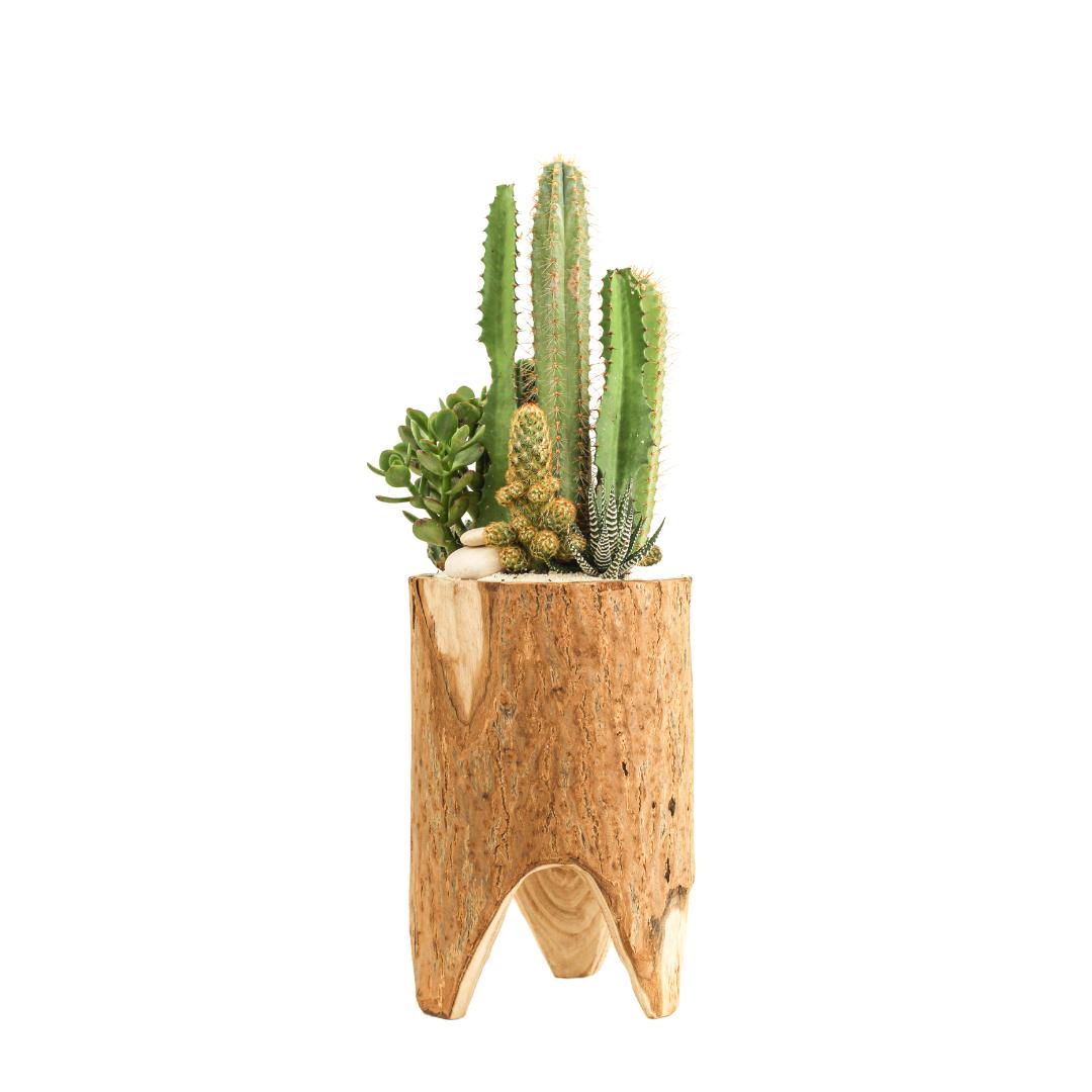 Natural Wood Pedestal - Green Garden (Small)