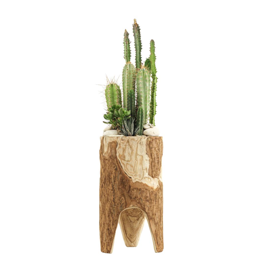 Natural Wood Pedestal - Green Garden (Large)