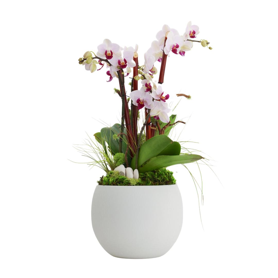 "Oslo Small - Double Mini Orchid (7""D x 19"" H)"