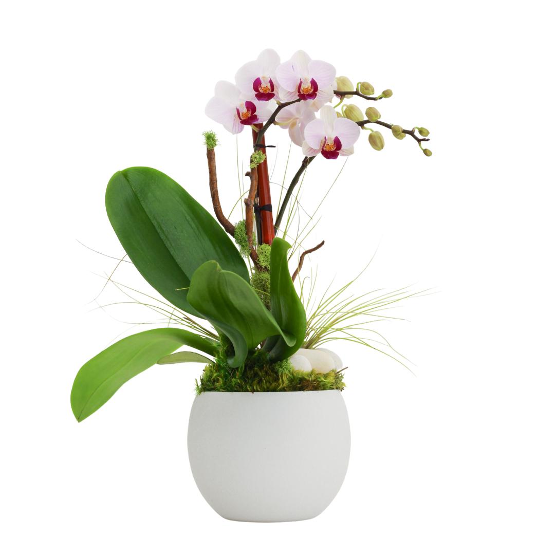 """Oslo Small - Single Mini Orchid (5.5""""D x 16"""" H)"""
