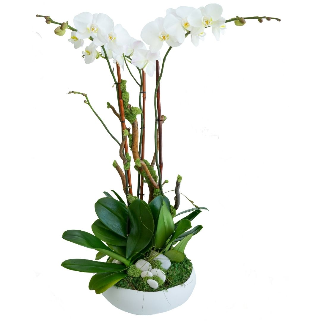 "Sydney Medium - Triple Orchids (13""D x 37""H)"